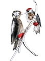 Swarovski  Black Diamond Woodpeckers