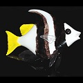 Soul Glass Schooling Banner Fish Glass Sculpture Wall Sculpture